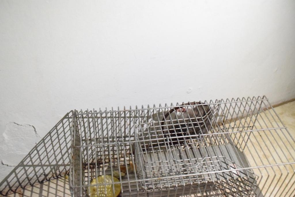 Vereador encontra rato durante fiscalização no prédio do CAPS II