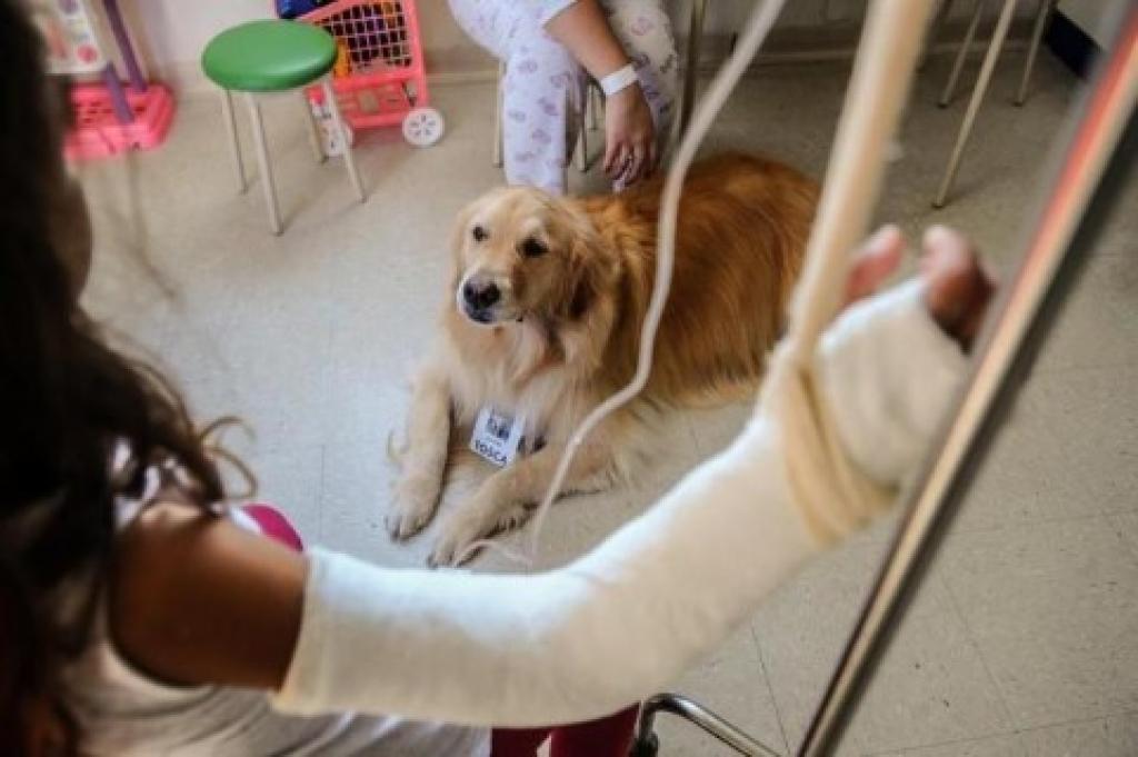 Projeto de lei quer liberar entrada de animais de estimação em estabelecimentos de saúde